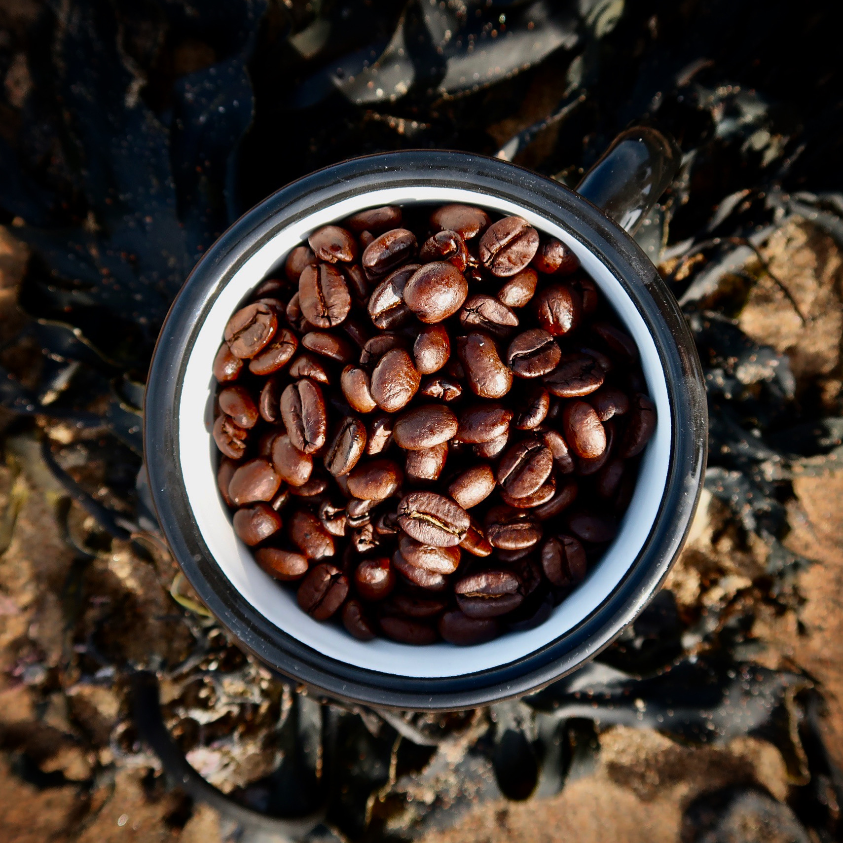 Boggle Hole Coffee Beans